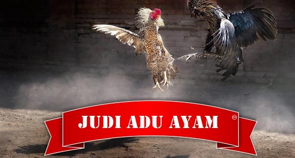 Adu Ayam Online Terpercaya dan Terbaik